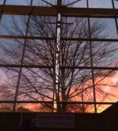 mcc-tree-through-glass